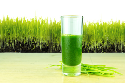 wheat-grass.jpg